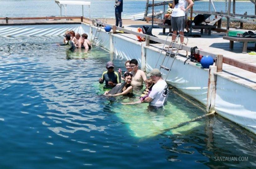 Bali Dolphin Lodge